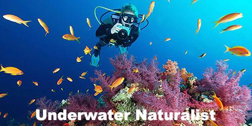 aquaventure underwater naturalist